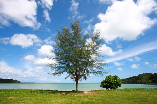 scenics tree with perspective cloud
