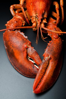 Prepared lobster on black