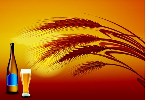 Barley grains at the sunset on the back. In front of a beer bottle and a glass of beer