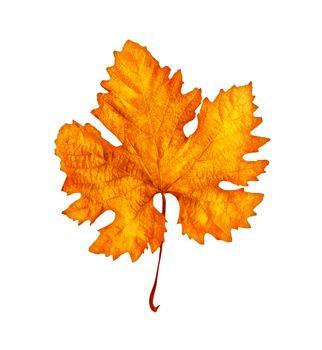 Autumnal leaf