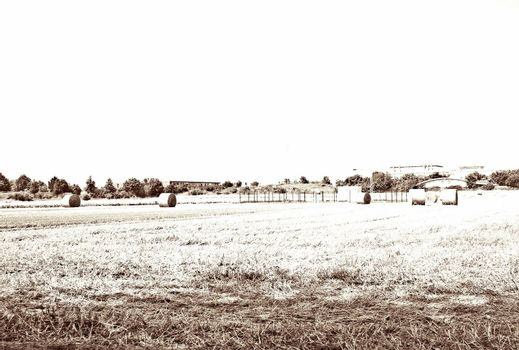 High key recording of straw bales on a mown field.        SONY DSC