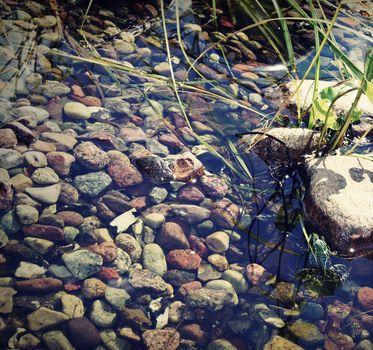 Tree frog in a rockery garden pond.