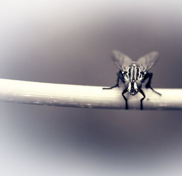 Macro shot of a fly that sits on a blade of grass.