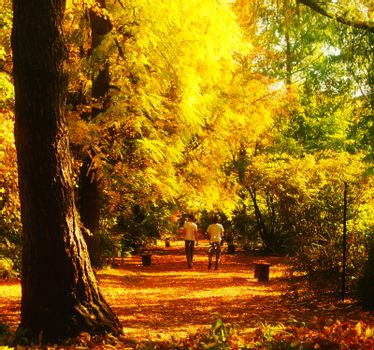 Autumn walk in a botanical garden, two young men playing with colorful leaves and show vitality.
