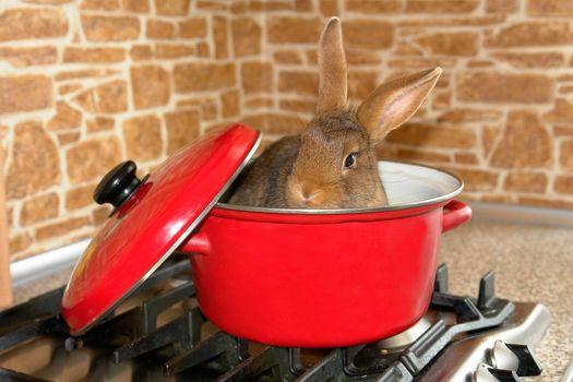 house brown rabbit in kitchen