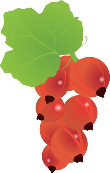 berries currants
