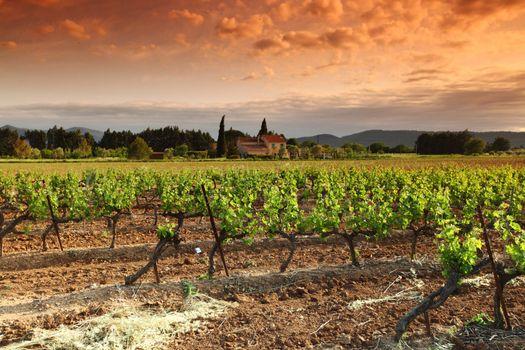 Amazing Vineyard Sunset in france