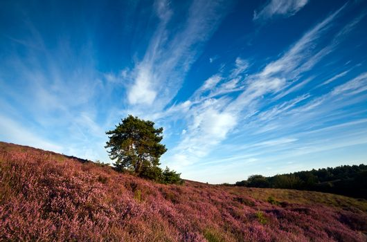 heather flowering hill and sky