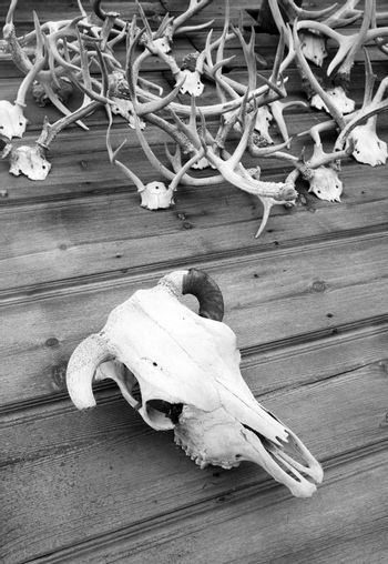 The Skull and Antlers