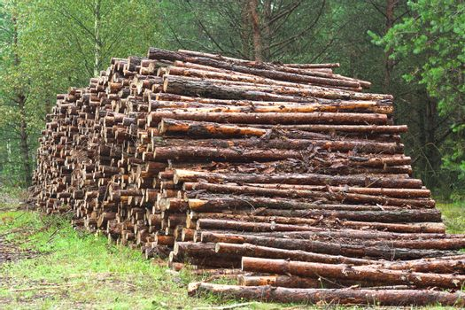 A lot of sawn timber