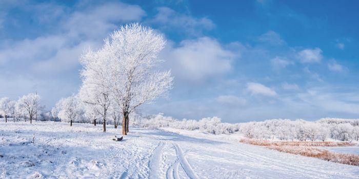 Winter landscape with frozen tree, road and blue sky with clouds. Panorama