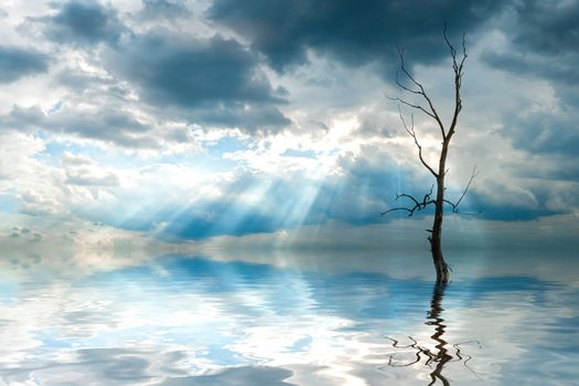 Lonely dry tree reflection in water, sun rays in clouds
