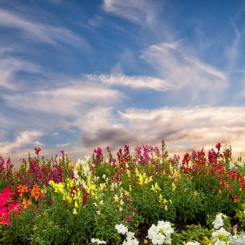 Flower meadow and majestic clouds in the sky, summer landscape