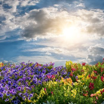 Beautiful summer landscape with flower meadow and majestic clouds in the sky