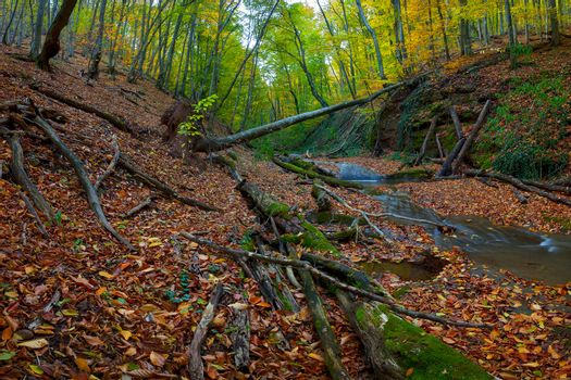 The old wood with the tumbled-down dry trees with a stream in mountains, autumn landscape