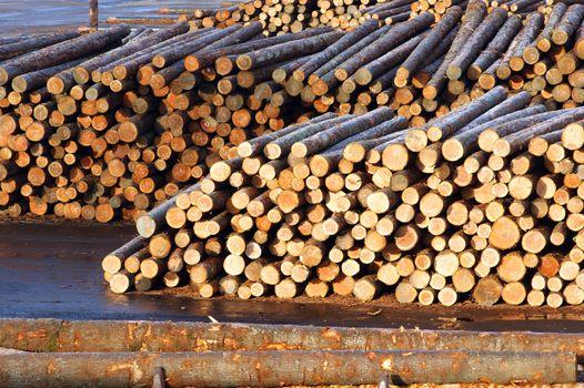 Lumber Mill Log Pile