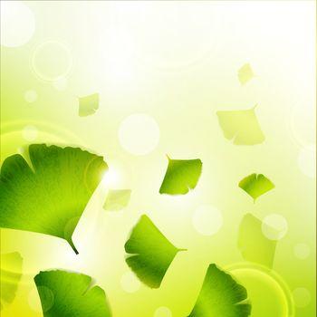 Ginkgo Biloba leaves green background