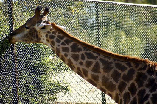 Beautiful animal habits of the African savannah