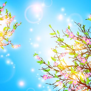 bright spring background with cherry blossom