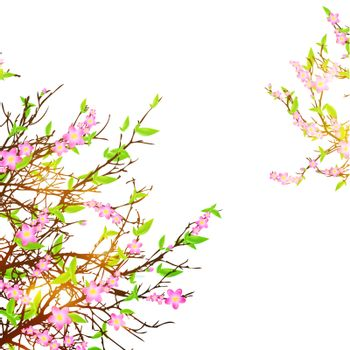 cherry blossom over white background, copyspace