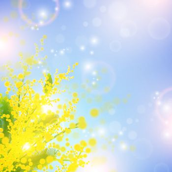 Mimosa flowers over blue sky and magic spring lights