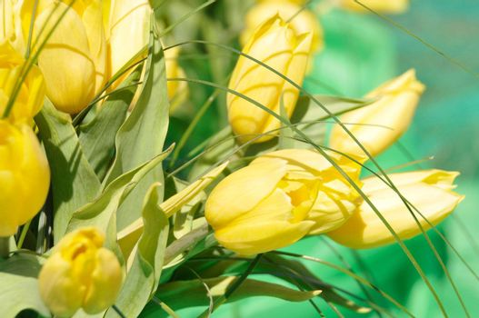 background with beautiful yellow tulips