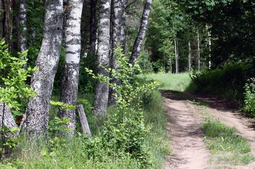 Remote country road mendering in the forest
