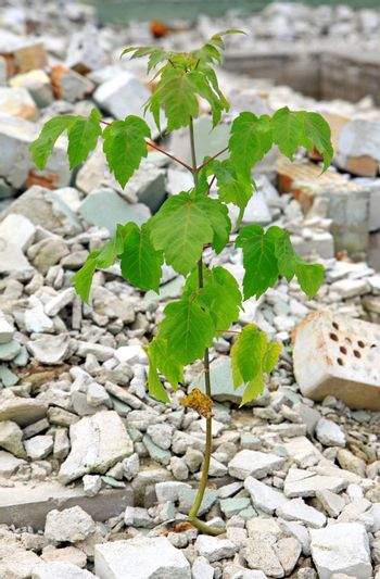 Young green plant growing alone in debris