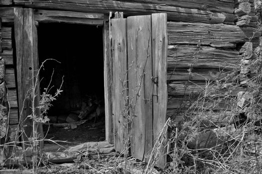 Old rotting door opened, black and white picture