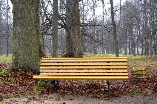 Yellow wooden bench in the empty park in autumn