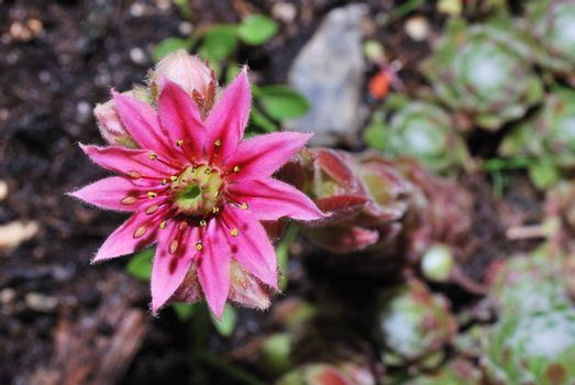 beautiful little pink flower in the garden and spring