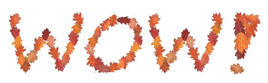 word wow made of autumn leaves as a button