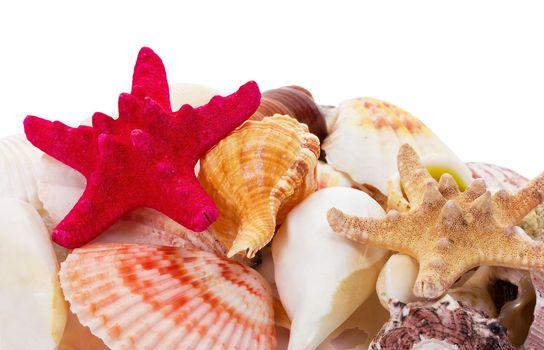 seashells background with starfish