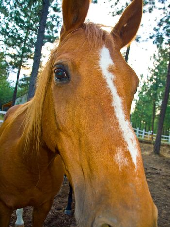 A Horse Portrait in the Evening Hour
