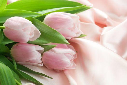 Beautiful Tulips And Silk