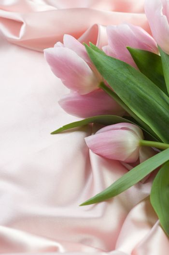 Beautiful Tulip And Silk. With Copy Space