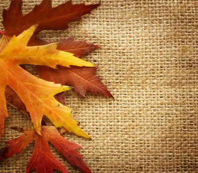 Autumn wet leaves over black