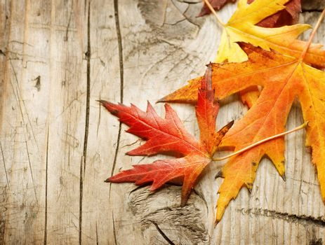 Autumn Leaves over wooden background. With copy space