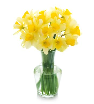 Beautiful Daffodils In A Vase