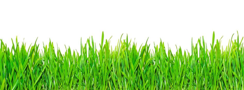 Fresh spring grass on white isolated background