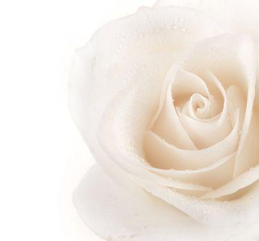 Beautiful Soft Rose Border