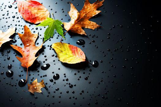 autumn autumnal background beautiful black bright