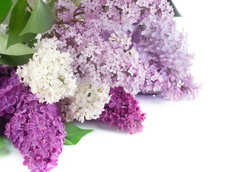 Beautiful Lilac Flowers Border