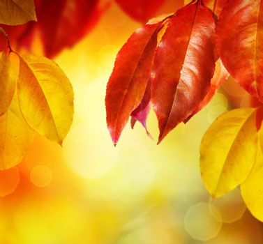 Fall.Autumn leaves