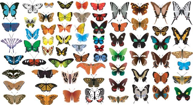 Big vector collection of butterflies