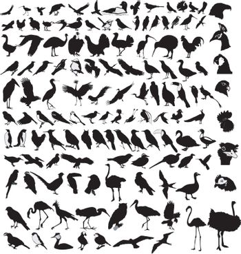 big set of the different birds