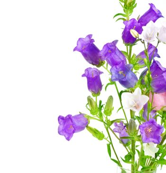 Bell Flowers Border