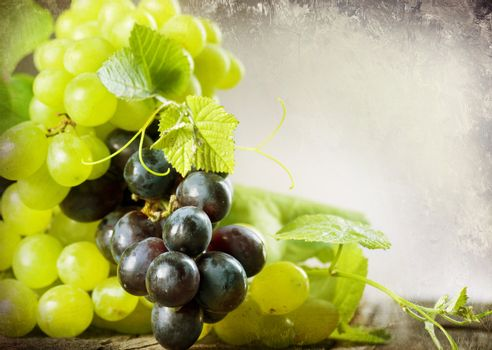Bunch Of Grape. Vintage Styled. With Copy-space