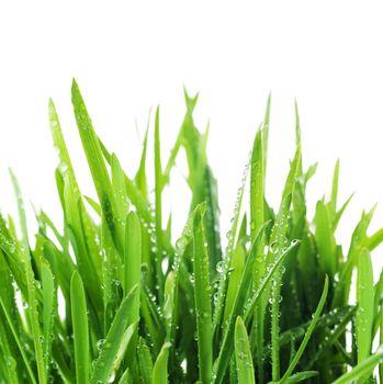 Fresh Grass