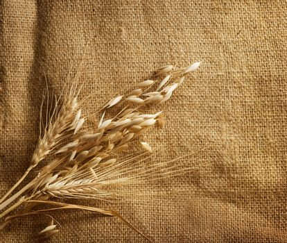 Wheat Ears border on Burlap background. with copy-space